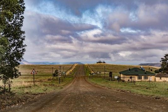 roads through grasslands