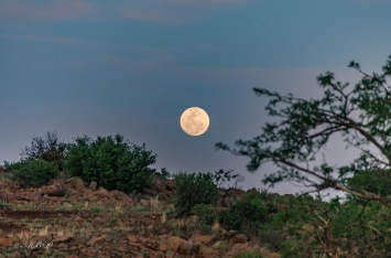 full moon through bush